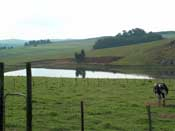 Lake in the field by the farm House